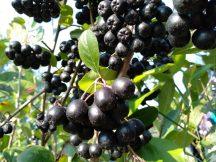 Alma- Fekete berkenye 100%-os gyümölcslé (3 liter)